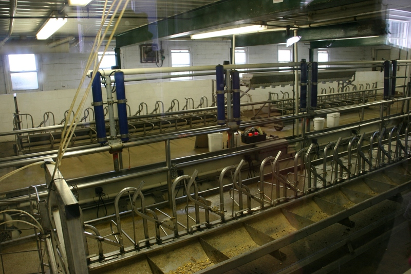 Looking through a window, visitors get a look at the area where the sheep are secured and fed during milking.