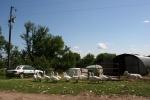 Simple Harvest Organic Farm, 18 geesewalking
