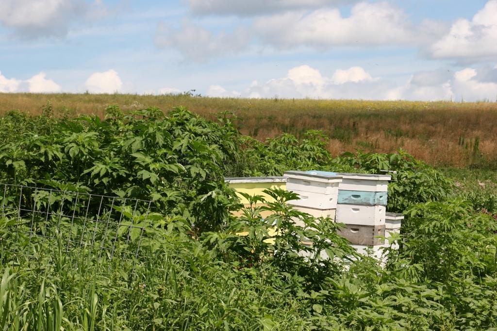 Simple Harvest Organic Farm, 79 beehives