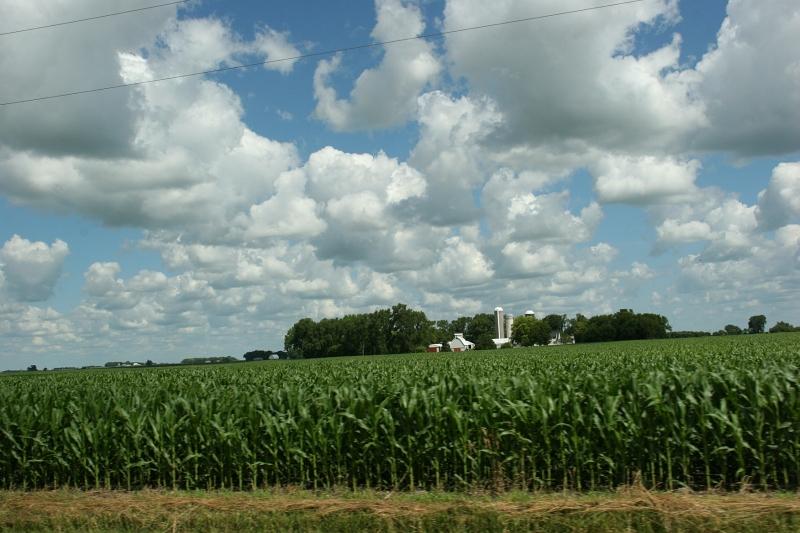 Sky in sw MN, 28 full corn field, farm site and cloudy sky