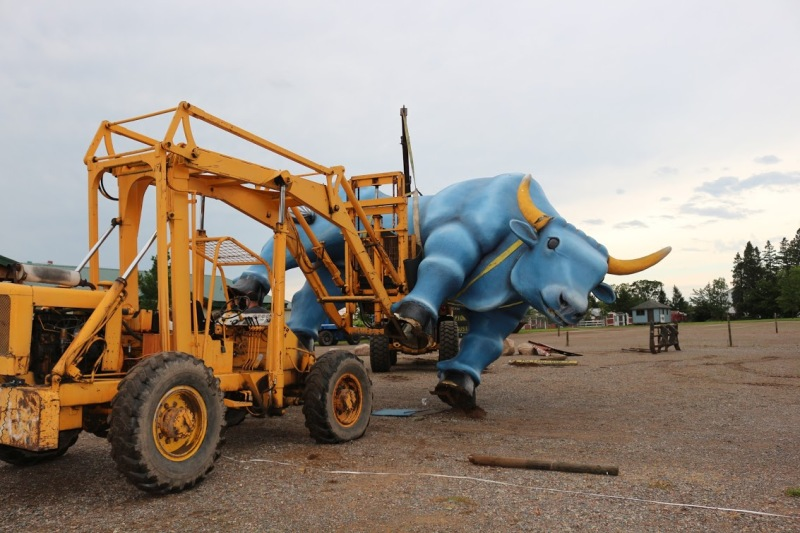 Reeds Backhoe Service worked to upright Babe. Photo by Adam Rademacher and courtesy of Paul Bunyan Land.