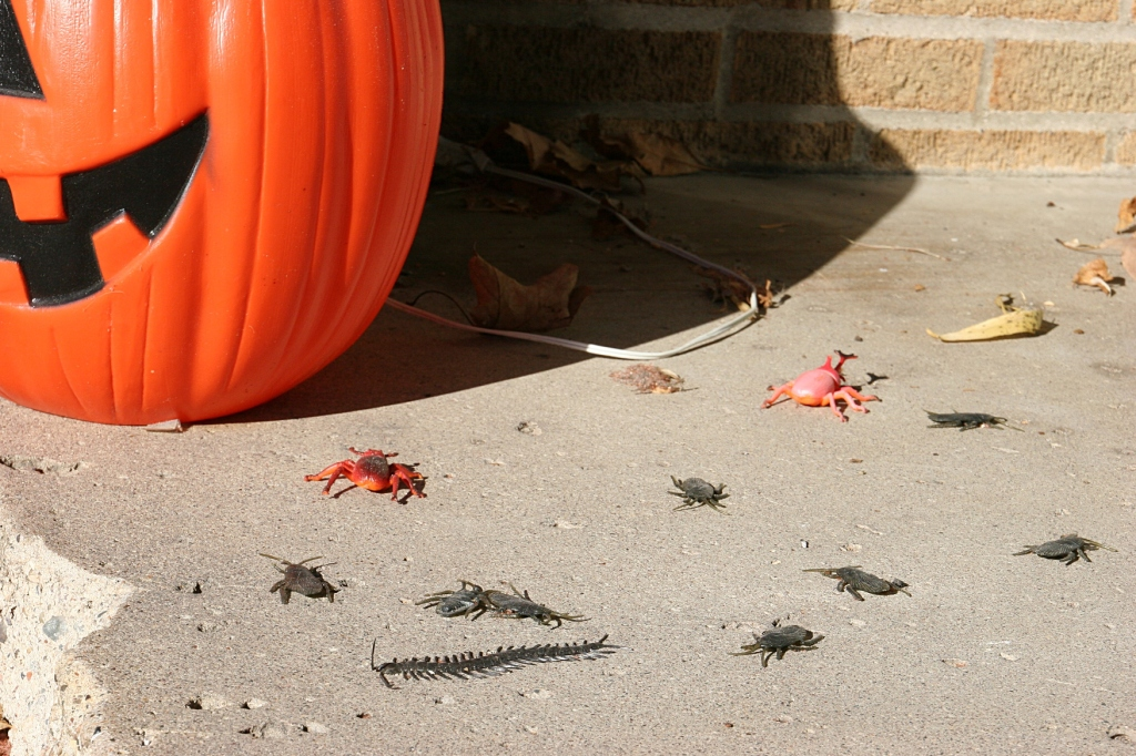halloween-38-bugs-on-steps