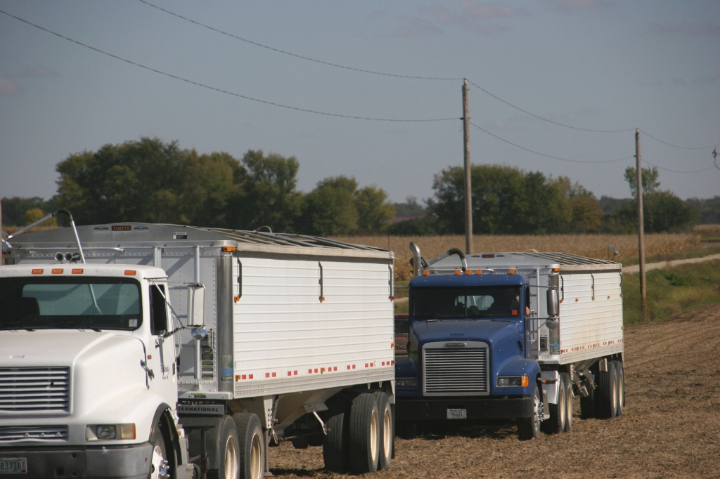 North of Belview, trucks await the harvest.
