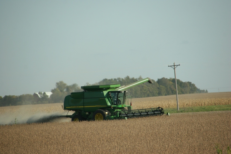 Combing beans near New Ulm.