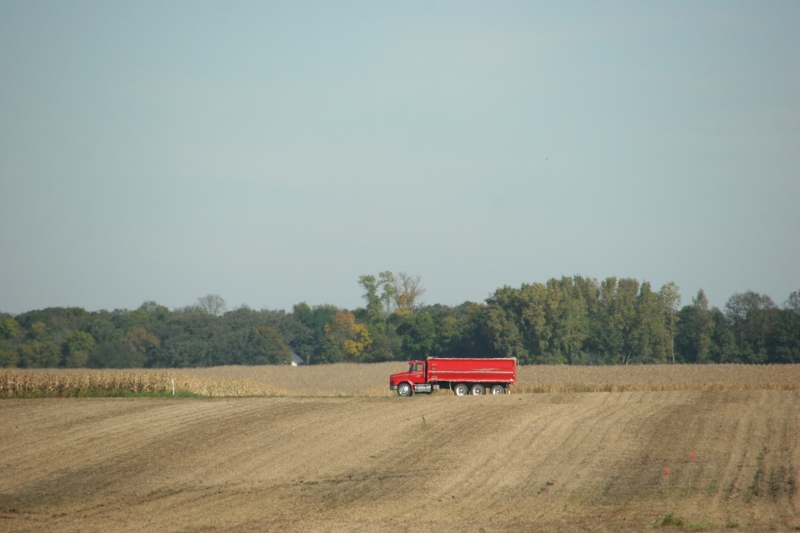 A red grain truck jolts color into a field near New Ulm.
