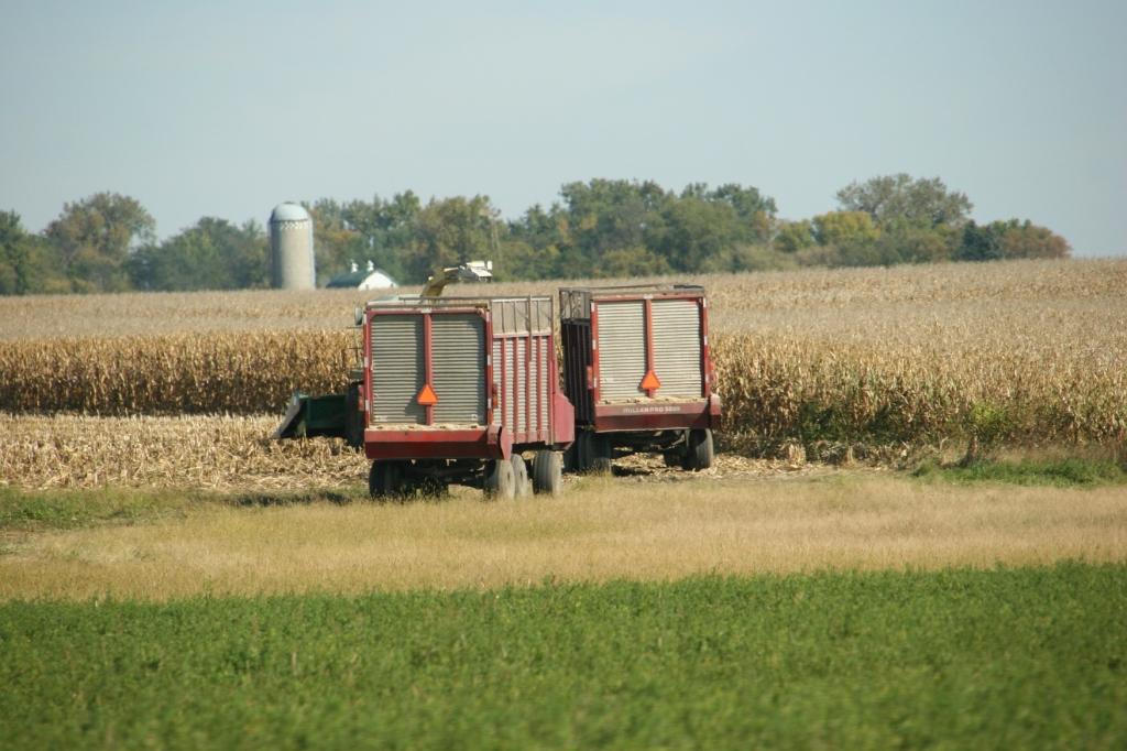 West of New Ulm, grain wagons sit in a field.