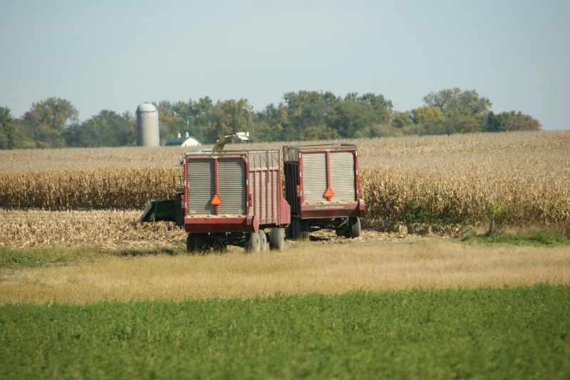 West of New Ulm, grain wagons sit in a field.