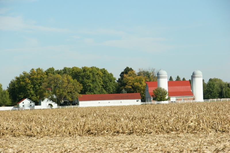 A partially-harvest cornfield between New Ulm and Morgan.