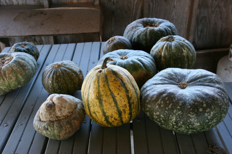 hayfield-26-squash-on-picnic-table