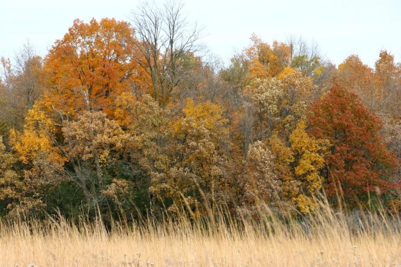 river-bend-59-treeline