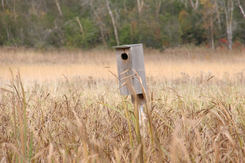 river-bend-63-birdhouse-in-prairie-grass
