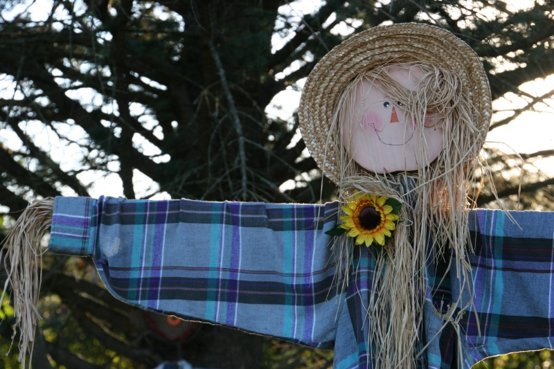 scarecrow-contest-255-scarecrow-in-flannel-shirt