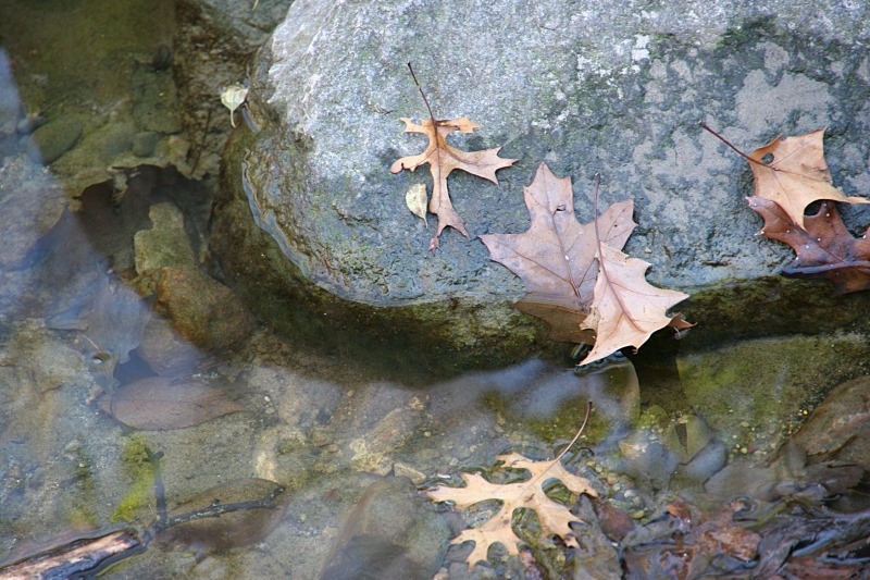 Every detail, even leaves in a creek in Kaplan Woods, delighted me.