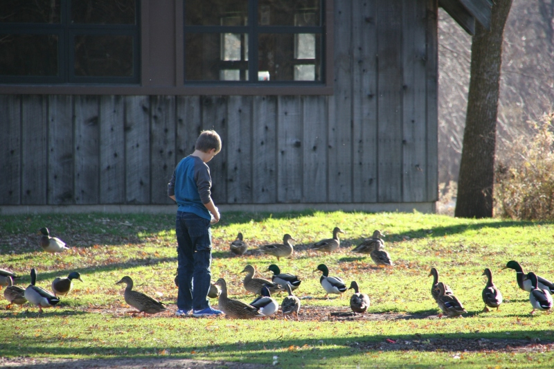 Feeding the ducks in Morehouse Park, Owatonna, Minnesota, Sunday afternoon.