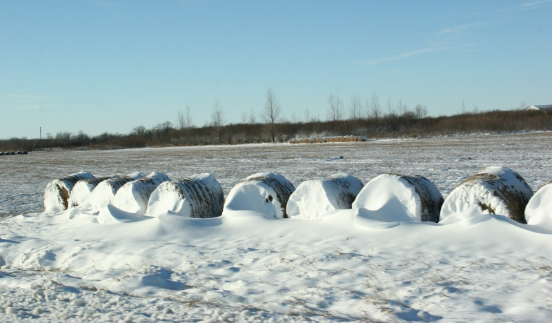 Round hay bales create a snow fence along Highway 23.