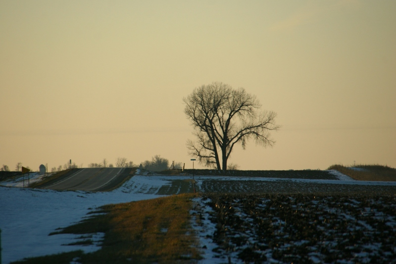 This lone tree along Minnesota State Highway 19 near the Belview corner has been here as long as I can remember.
