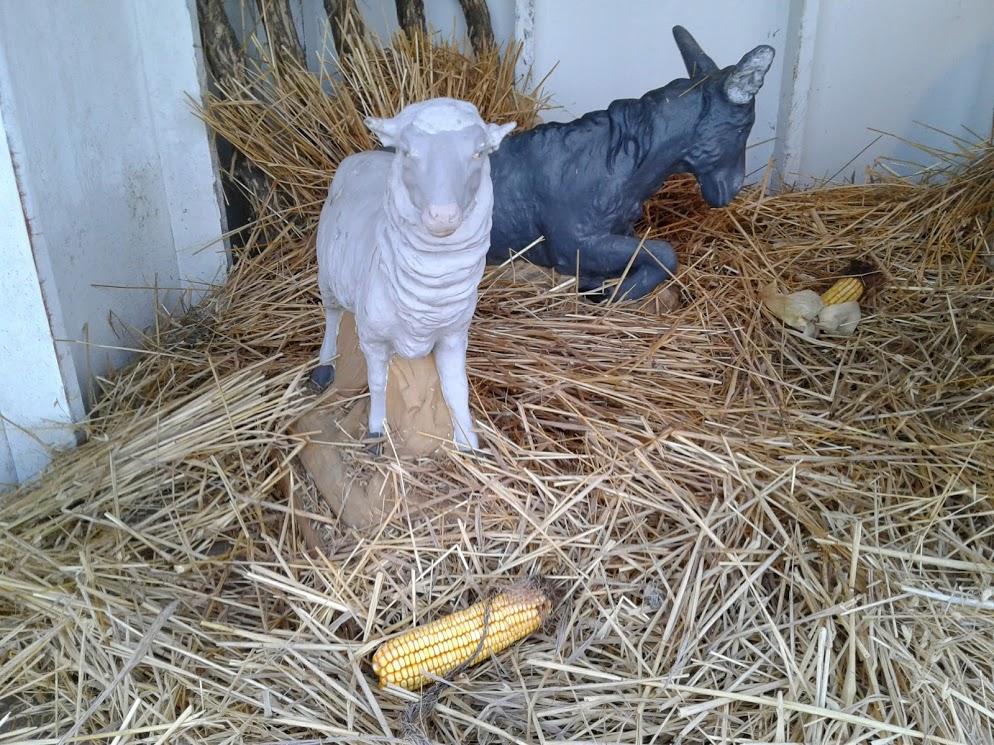 nativity-sheep-donkey