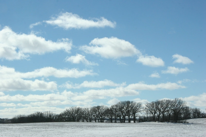 winter-landscape-12-treeline