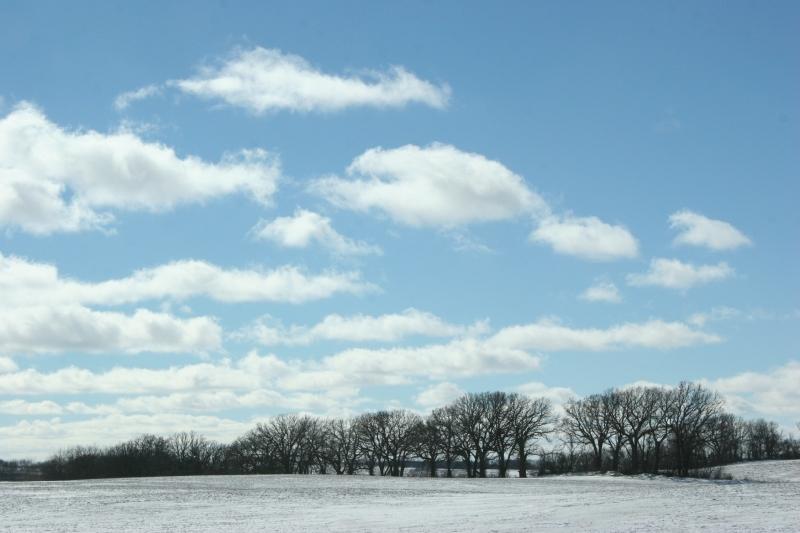 winter-landscape-12-treeline