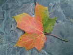 Autumn leaf – Copy