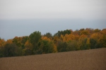 Autumn se Minnesota, #109 trees along CR12