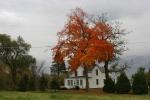Autumn se Minnesota, #113 house & mapletree