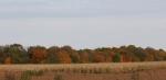 Autumn se Minnesota, #20 view from 175th St. W ruralFaribault