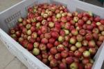 Autumn se Minnesota, #51 Apple Creek Orchardapples