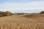 Harvest, #271 cornfield onhill