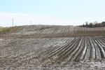 Harvest, #309 muddy fieldharvested