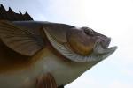 Mille Lacs Lake, #54 walleye headclose-up