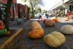 Pumpkin Patch, #72 pumpkinsoverview
