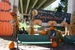 Pumpkin Patch, #79 welcome to the patch