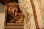 Nativity, #66 apebaby