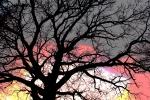 Sunset & tree,#4