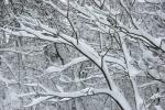 Snow, #35 snow ladentrees