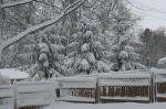 Snow, #7 evergreens