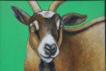 Farm animal portrait, #15 goat J.Fakler