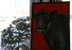Farm animal portrait, #2 black cow J.Fakler
