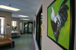 Farm animal portraits, #22 rooster & hallway J.Fakler