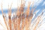 Memorial Park Dundas, #83 dried grass againstsnow