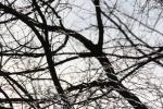 Trees, #28 black &white