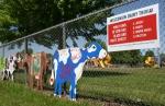 Cowtastic, trivia & 3 cows#51