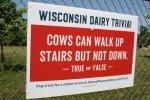 Cowtastic, trivia cows & stairs#85