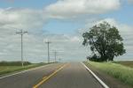 Peonies, #21 road toAspelund