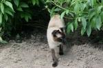 Peonies, #72 cat