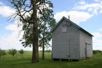 Peonies, #88 oak tree &outbuilding