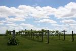 Peonies, #89 vineyard