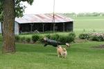 Peonies, #93 tire swing &dog