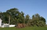 Damage by Wapacuta Park, #21 fallentree